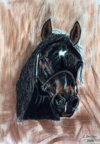 caballo10