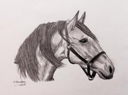 caballo14