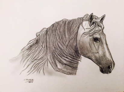 caballo20