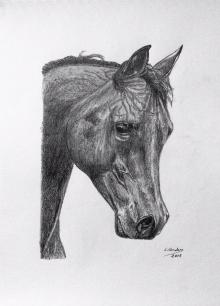 caballo22