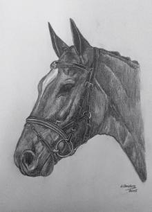 caballo26