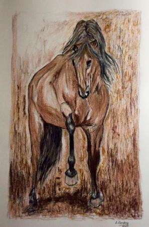 caballo27