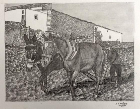 caballos35