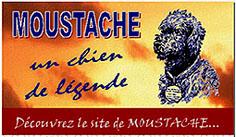 Logo_site_moustache_bis