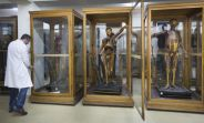 museo anatomia complutense