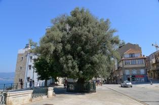 El Olivo paseo alfonso XII
