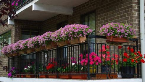 balcones5